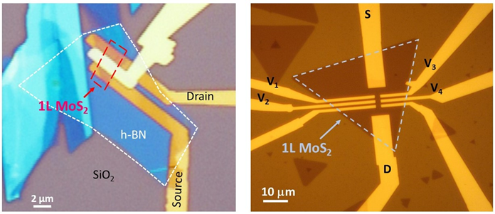 Fabricating single-layer MoS2 and WSe2 transistors