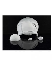 3DCeram Hydroxyapatite